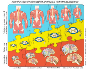 Solving the pain puzzle?